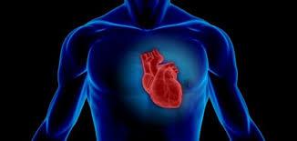 دراسة: القلب قادر على شم الروائح !