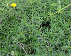5 أعشاب مذهلة… تساعد على التركيز