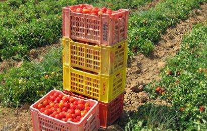 سلاسل القيمة والمنظومات الفلاحية الغذائية