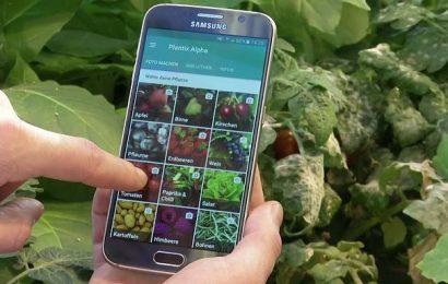 """""""بلانتيكس""""، تطبيقية رقميّة للهواتف الذكيّة في خدمة القطاع الفلاحي بتونس"""