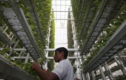 المزارع العمودية رسميًا في محلات البقالة
