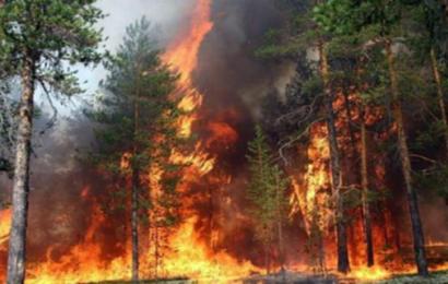 الكاف : اندلاع حريق هائل بغابات جبل بوعديلة