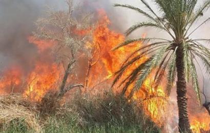 حريق باحدى الغابات في القصر يأتي على 25 نخلة بقفصة