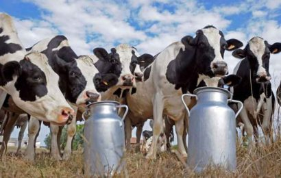 اتحاد الفلاحة: 'إذا لم يتم دعم الفلاّح..باكو الحليب قد يصبح بـ3000'