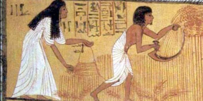 بالقمح والشعير..المصريون القدامى أول من أجرى إختبار كشف الحمل وتحديد جنس الجنين