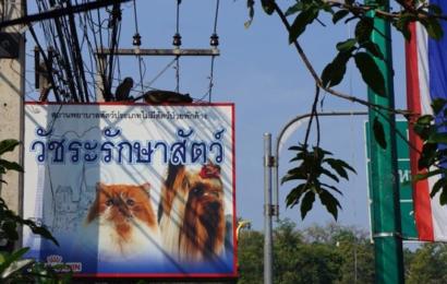 شركات تايلندية تبحث فرص الاستثمار في تونس