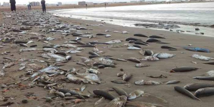 كميات كبيرة من الأسماك على ساحل بحر  شط سلام وغنوش بقابس