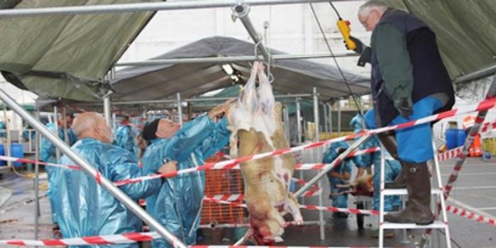 وزيرة بلجيكيا : تمنع المسلمين من ذبح أضاحي العيد !!