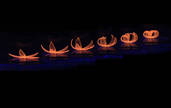 أول طباعة رباعية الأبعاد (4D) للسيراميك في العالم