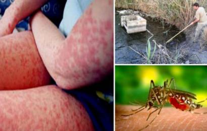 رسمي سوسة: حمى غرب النيل بمساكن تتسبب بحالة وفاة و جهود للقضاء على البعوض