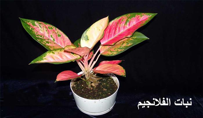 نباتات منزلية كنت تظنها للزينة لكنها سامة…تعرف عليها