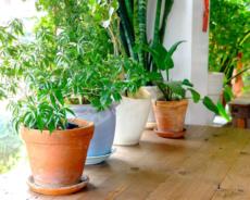 أهمية الزراعة المنزلية و طرق زراعتها