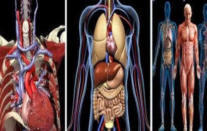 جهاز قادر على التقاط صورة طبية ثلاثية الأبعاد لكامل الجسم