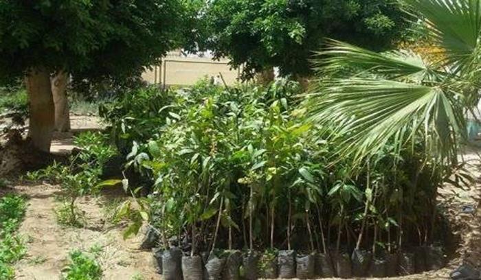 وزارة الفلاحة تقدم شتلات أشجار بصفة مجانية