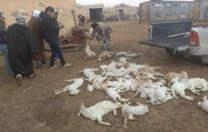 الجزائر: الطاعون يواصل زحفه في 15 ولاية
