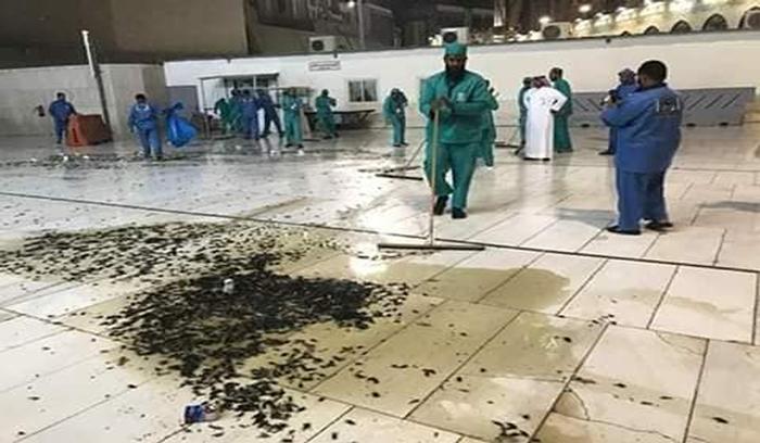 حشرات طائرة تهاجم الحرم في مكة المكرمة بكثافة كبيرة
