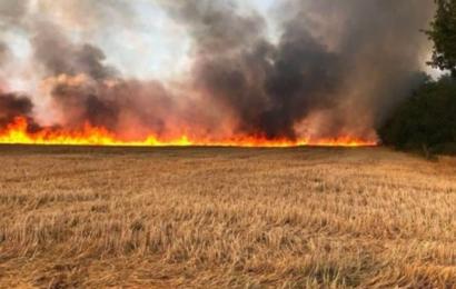 الكاف: تكوين لجنة جهوية لحماية صابة الحبوب من الحرائق