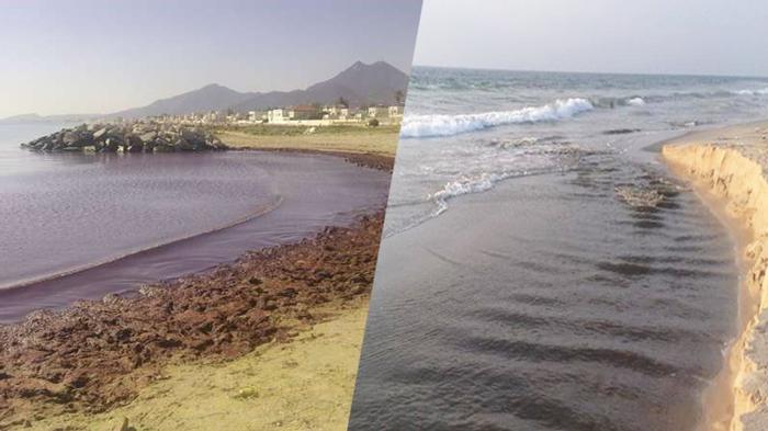 """نحو بعث مصرف بحري بتكلفة 150 مليون دينار لإعادة تهيئة شواطئ """"الزهراء"""" و """"حمام الأنف"""""""
