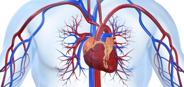 الإنطلاق في إرساء تقنية جديدة للإستغناء على دواء'سانتروم' لفائدة مرضى القلب والشرايين